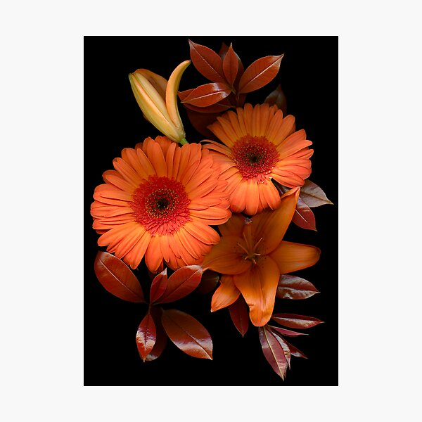 Gerbera Cluster Photographic Print