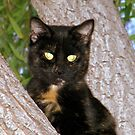 Cali The Cat by R&PChristianDesign &Photography
