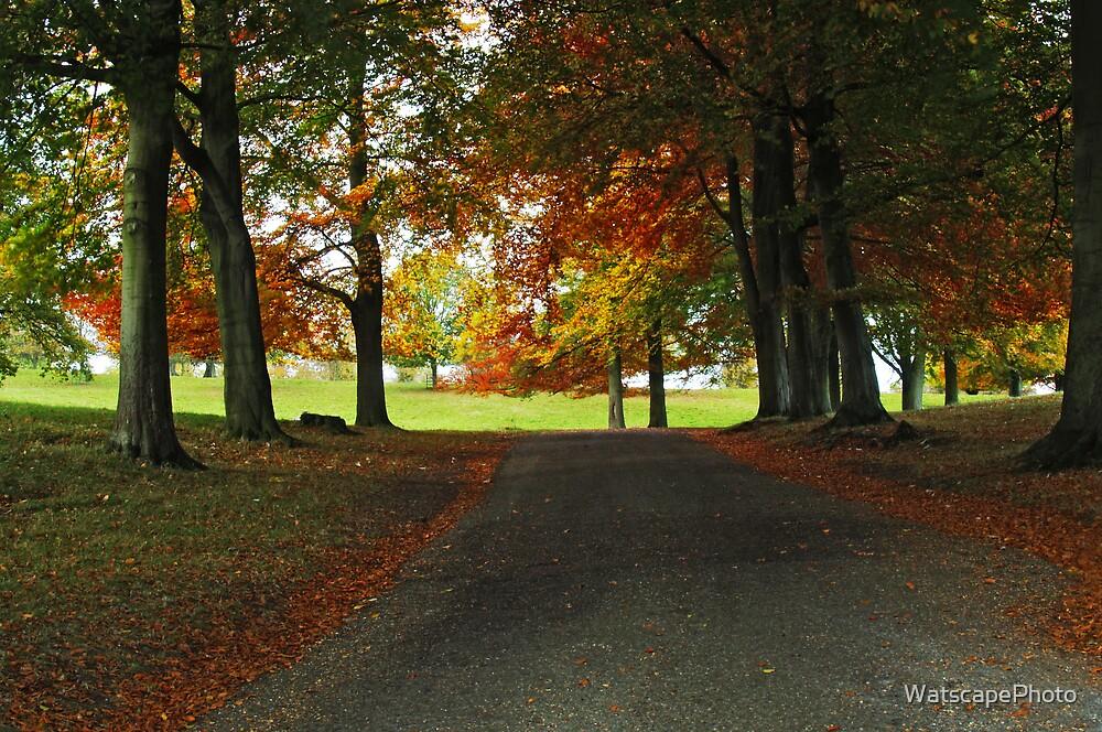 Autumn by WatscapePhoto