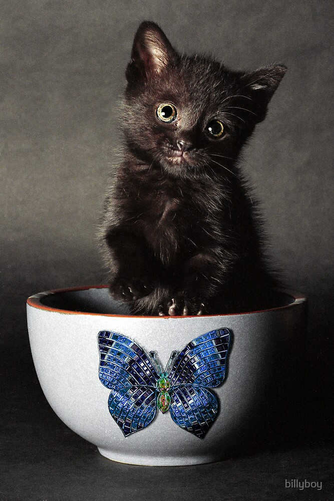 Little Butterfly Guy by billyboy