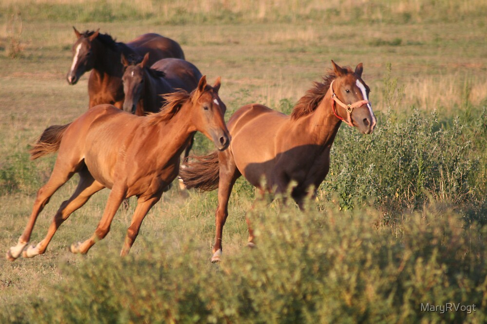 The Galloping Four by MaryRVogt
