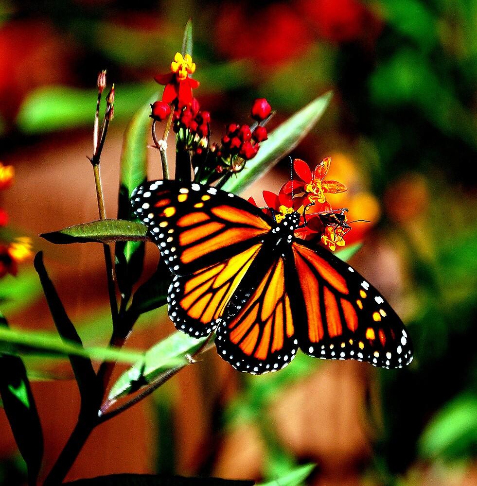 Fall Monarch by NatureRules