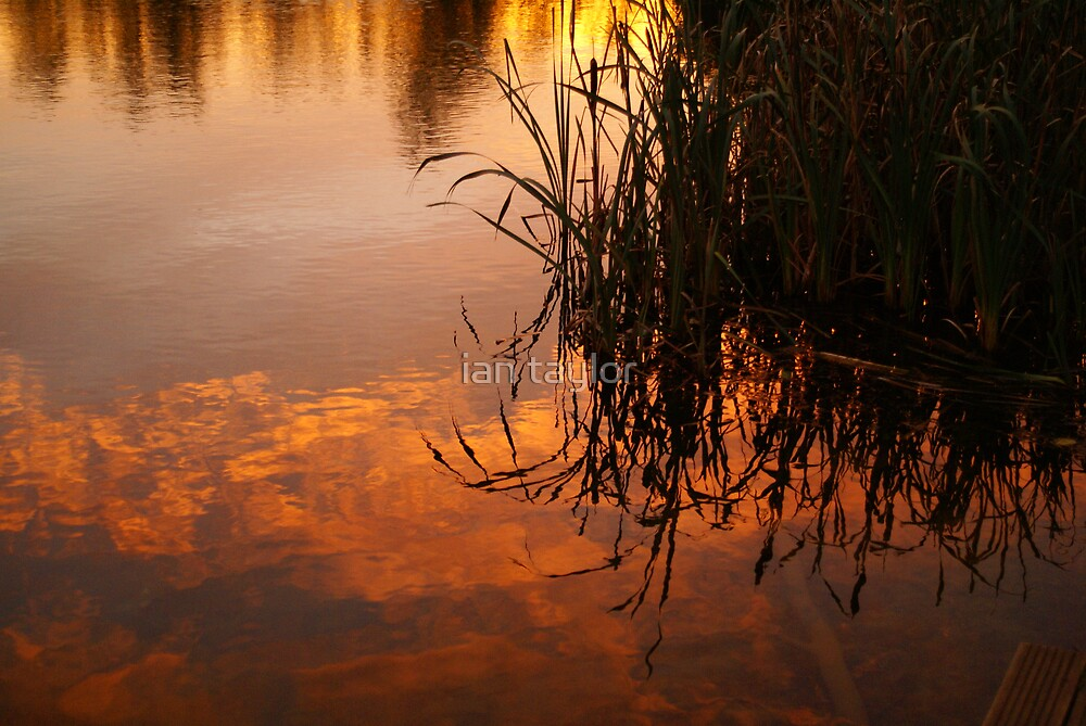 reflections in red by ian taylor