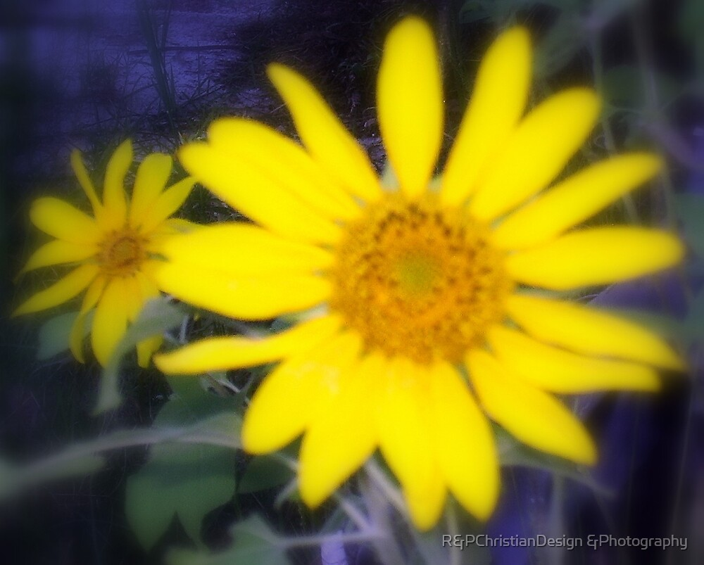Blurred Daisies by R&PChristianDesign &Photography