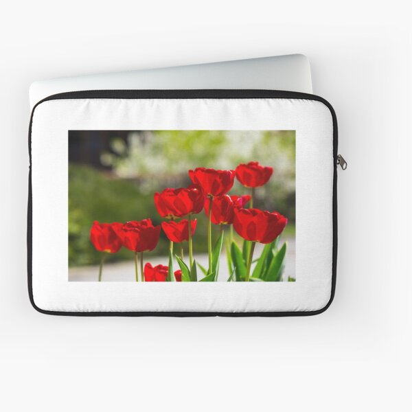 red tulips on color blurred background  Laptop Sleeve