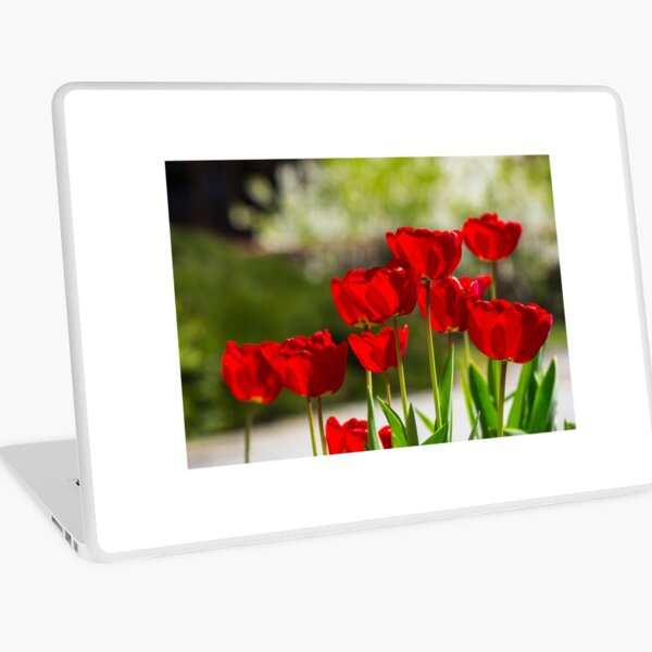 red tulips on color blurred background  Laptop Skin