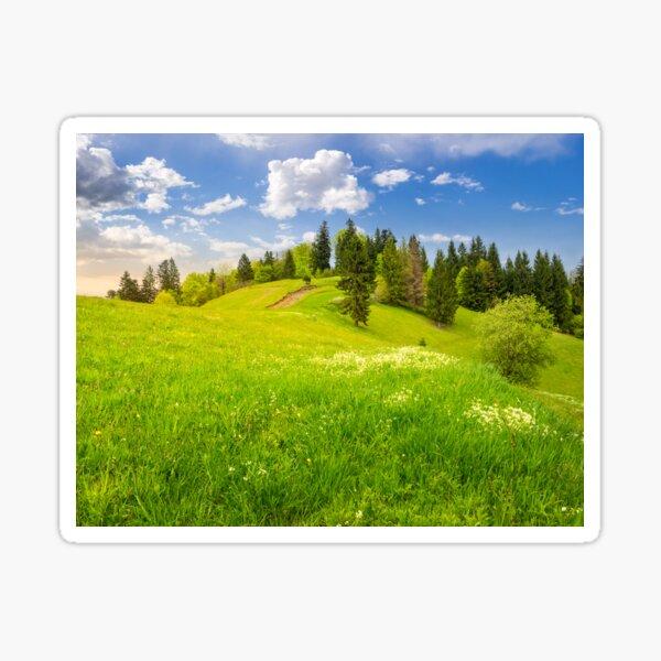 few trees on hillside meadow Sticker