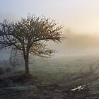 trees in fog on the meadow by mike-pellinni