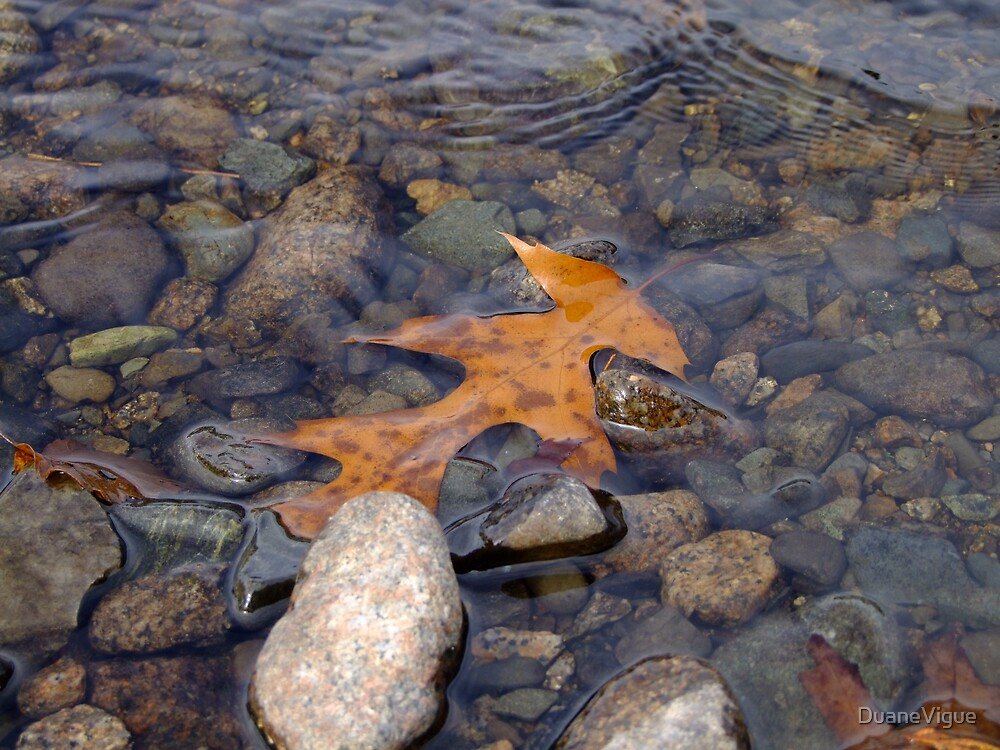 Leaf in Water by DuaneVigue