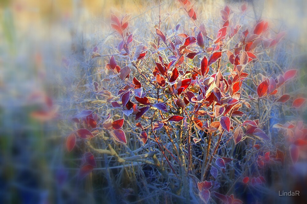 Frosted Morning... by LindaR