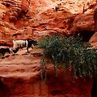 PETRA GOATS by BYRON