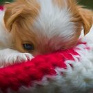 Puppy snuggled in wooly hat by alan tunnicliffe
