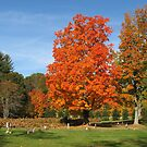 Orange Tree by Stormoak Lonewind