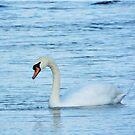 Peaceful Swan by pokegirl93