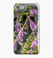 Nantucket Gardens VI iPhone Case/Skin