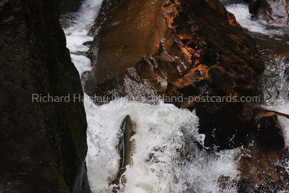 Salmon Leep by Richard Hanley www.scotland-postcards.com