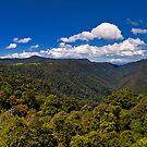 Dorrigo Panorama by Mark Snelson