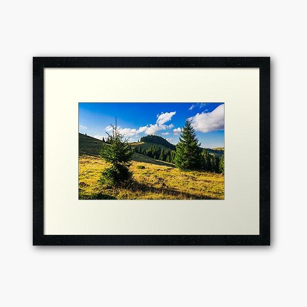 conifer forest  in mountains at sunrise Framed Art Print