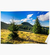 conifer forest  in mountains at sunrise Poster