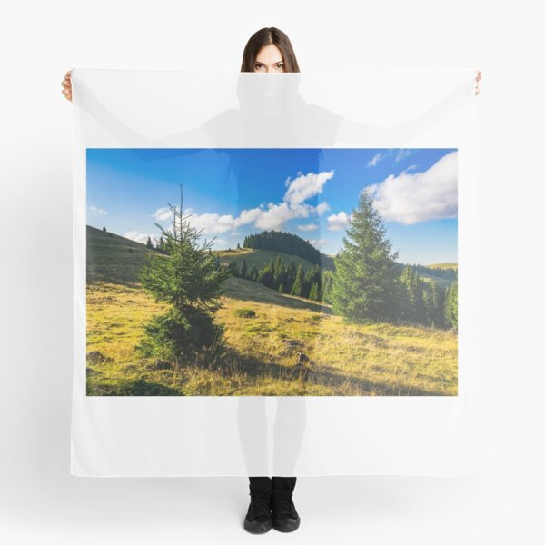 conifer forest  in mountains at sunrise Scarf