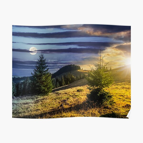 conifer forest  in mountains Poster