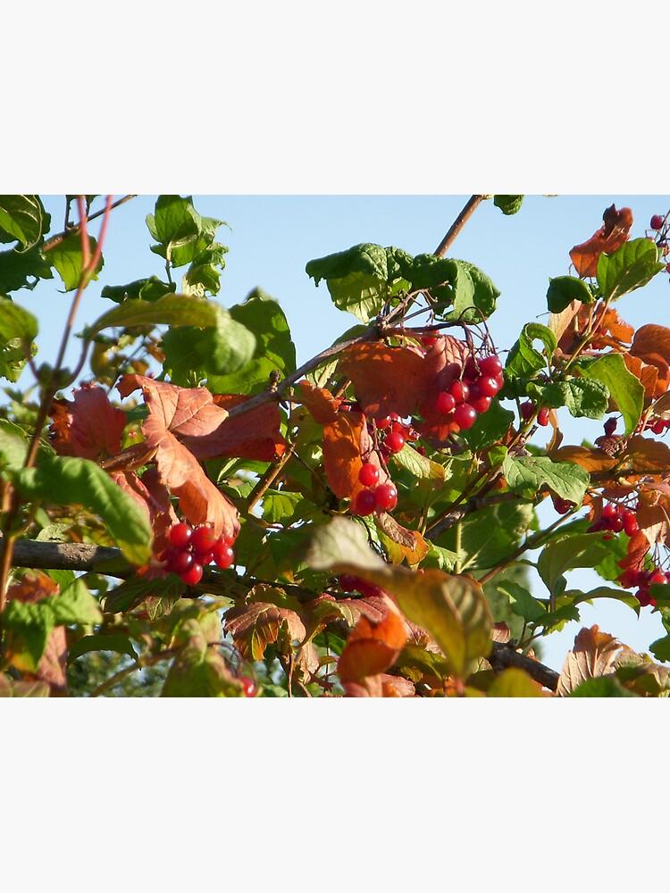 Berries by Anthropolog