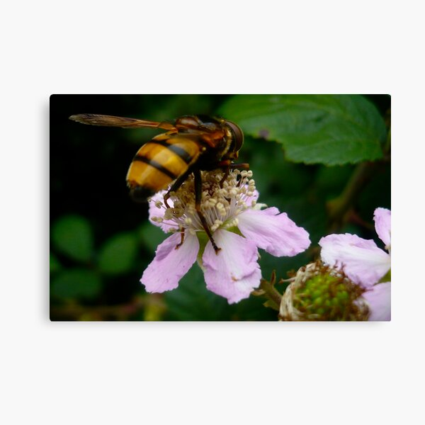 Busy, busy, busy! Canvas Print