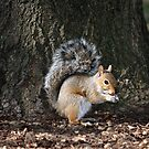 Do You Have A Peanut? by BigD