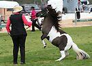 Naughty Pony by Jenny Brice