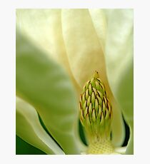 Heart Of The Magnolia Photographic Print