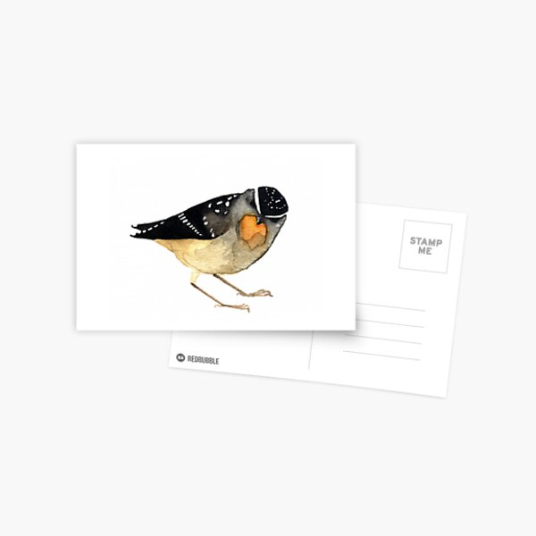 Spotted Pardalote Postcard