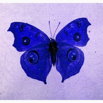 Prussian Blue butterfly by zyonchilde