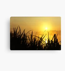 Sunrise Through The Reeds Canvas Print