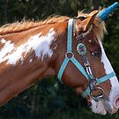 Beautiful Horse by TJ Baccari Photography