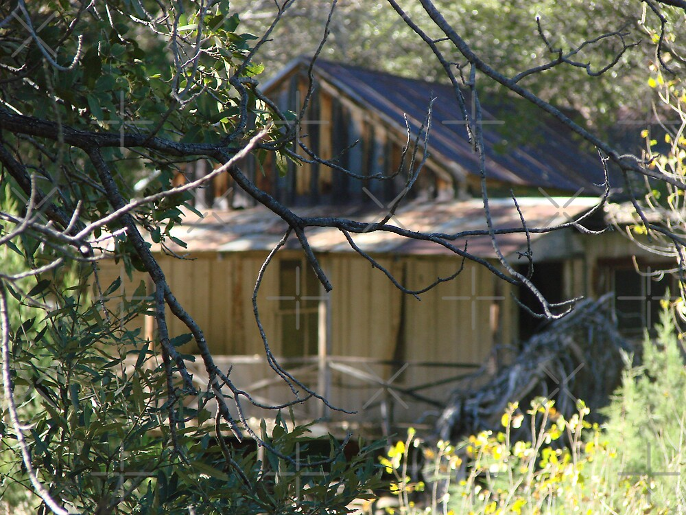 Hidden Cabin by Kimberly Miller