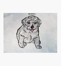 Puppy, Lab, Dog, Animal Photographic Print
