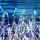 Wildflower Twilight by Shawna Rowe