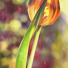 Romantic Tulip by Kasia-D