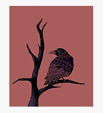 Three-Eyed Crow on a Branch  Photographic Print