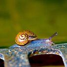 Snail trail! by Martyn Franklin