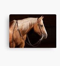 Palomino Quarter Horse at DSR Ranch Canvas Print