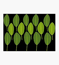 Ficus - Floral Background Photographic Print