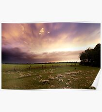 Wildflower Meadow at Sunset Poster