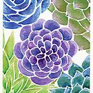 Watercolor Succulents  by balsamandolive