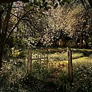 Rusty Gate by Annette Blattman