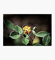 Fire Rose Photographic Print