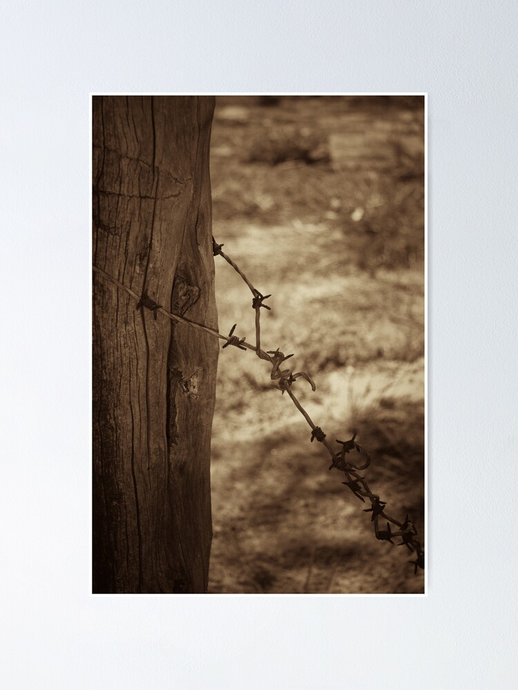 Alternate view of Old barbed wire - sepia Poster
