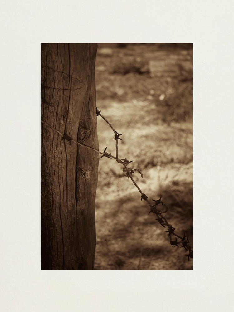 Alternate view of Old barbed wire - sepia Photographic Print