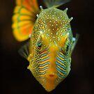Aquarium by louise