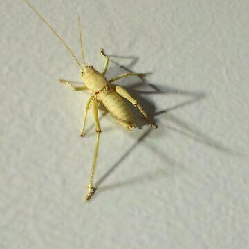 Desert Cricket by brodrickmade